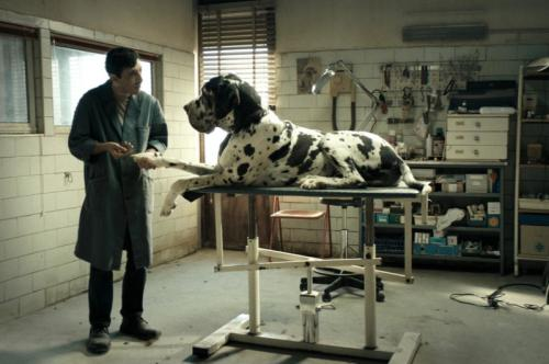 Read more about Dogman at IMDb